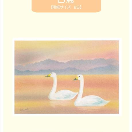 B5【白鳥】