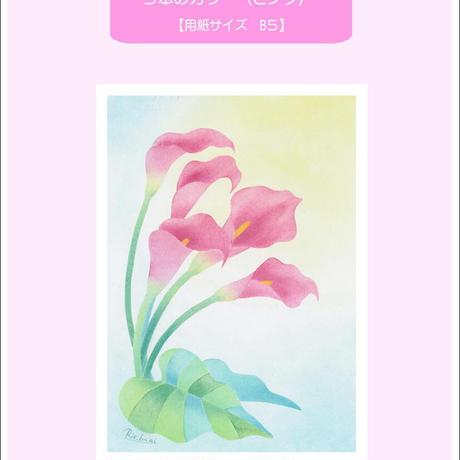 B5【5本のカラー(ピンク)】