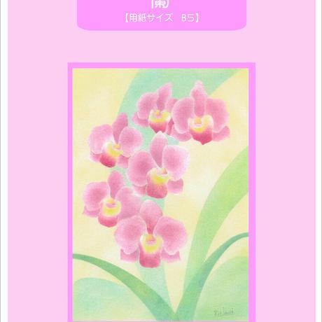 B5【蘭】