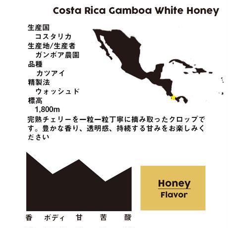 コスタリカ ガンボア農園 ホワイトハニー