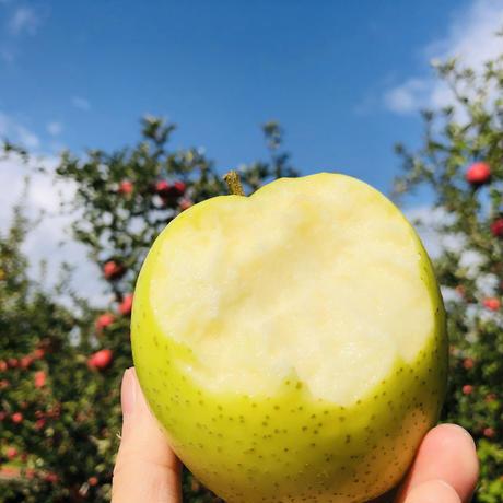 【王林】10キロ/約28~46玉/全国一律で送料無料/皮ごと食べれるりんご/減農薬/産地直送/青リンゴの代表選手/甘くてみずみずしくジューシー/赤リンゴとは違った風味を楽しめます