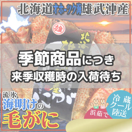 期間限定 北海道 雄武産 海明け 毛ガニ 約440g 1杯