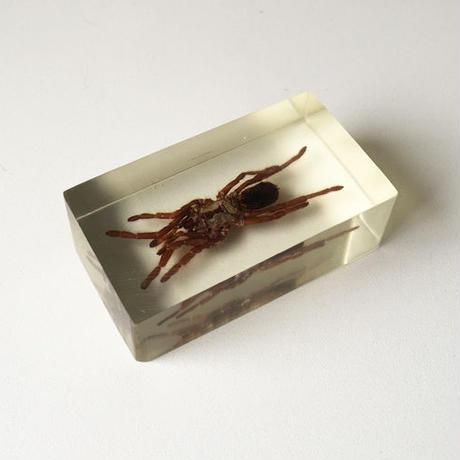 Bug Paperweight  spider