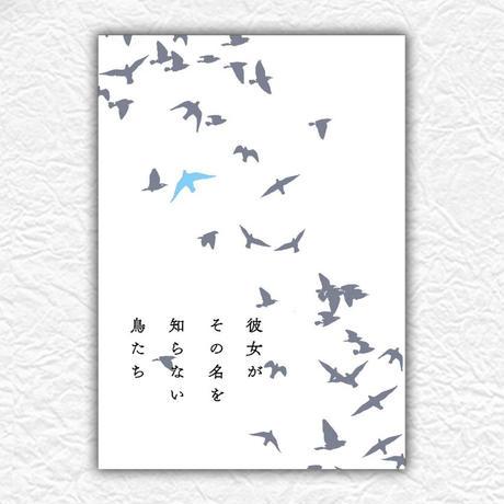 映画『彼女がその名を知らない鳥たち』パンフレット