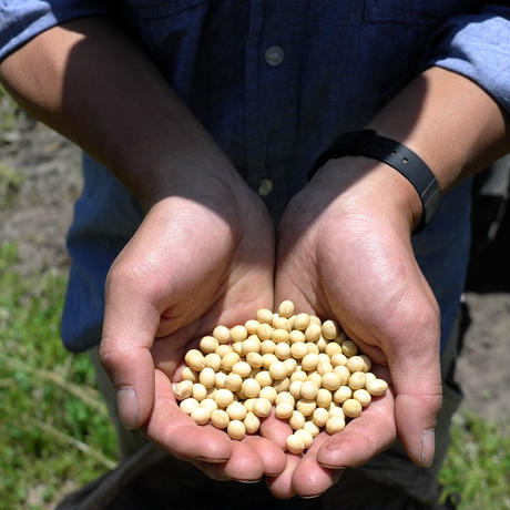 自然栽培 白大豆 サチユタカ