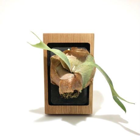 【若い衆シリーズ】 『観葉植物ホルダー(壁掛け)』限定1個 遠藤隼 ※店頭受取のみ