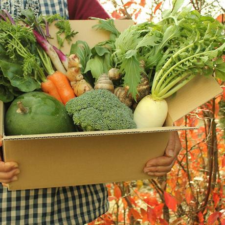 【2/21収穫】田舎のやさいセット [1箱だけお届け] 送料込み