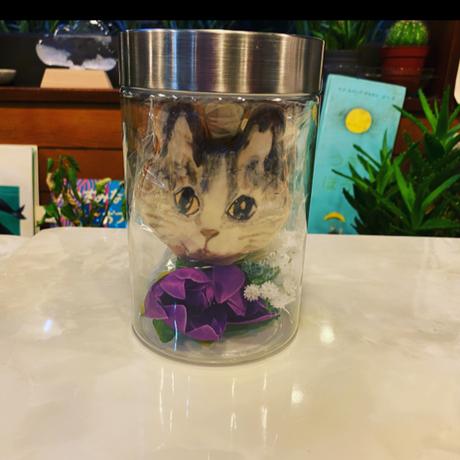 猫水槽2種