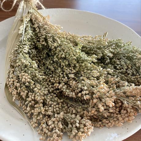 北海道産 早採りふんわり穂(イナキビ・農薬不使用)30g