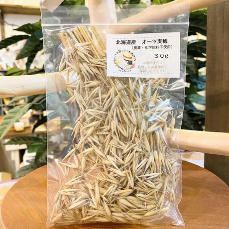北海道産 オーツ麦穂(農薬不使用)30g