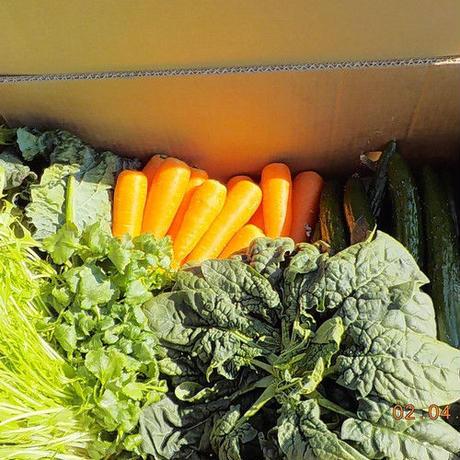 定期便 野菜セットSコース
