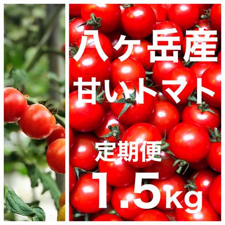 (定期便)  ミニトマト 箱込約1.5kg 味濃いめ トマト苦手なお子様にもお勧め  八ヶ岳(長野県産 )