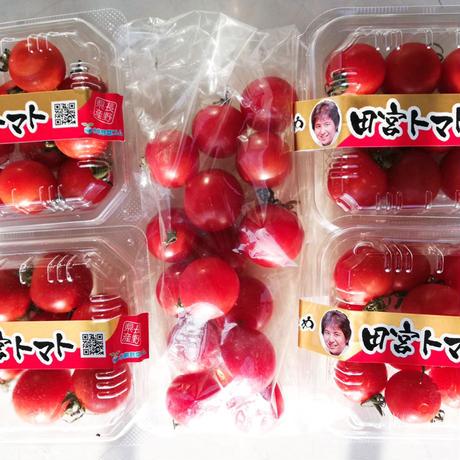 コクトマ! こくがあって味濃いめ 八ヶ岳産ミニトマト 4パック + 1袋   初めての方や一人暮らしの方におすすめ! 減農薬栽培