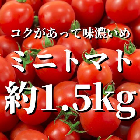 八ヶ岳産ミニトマト 約1.5kg(トマトが苦手なお子様にもオススメ)