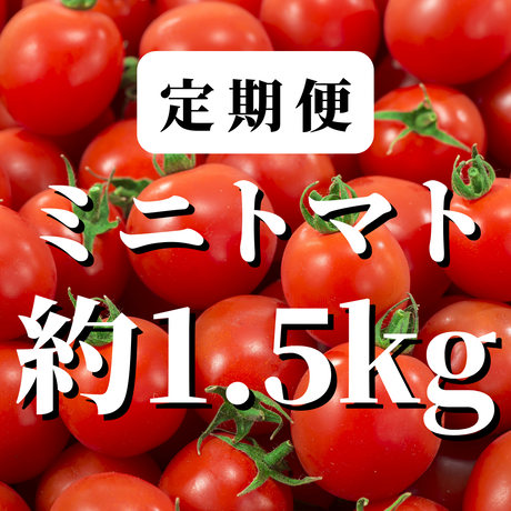 【定期便】八ヶ岳産ミニトマト 約1.5kg(トマトが苦手なお子様にもオススメ)