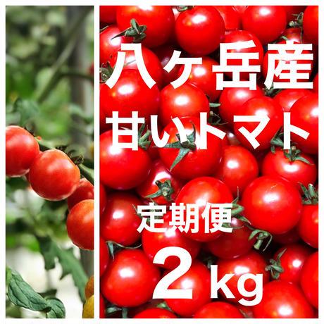 (定期便)  ミニトマト 箱込約2kg 味濃いめ トマト苦手なお子様にもお勧め  八ヶ岳(長野県産 )  2020年9月30日