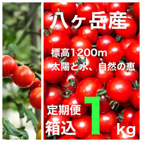 (定期便  訳あり価格) 「コクトマ! こくがあって味濃いめ  八ヶ岳産ミニトマト  箱込約1kg    お子様も食べやすい! 減農薬栽培  品質保証あり