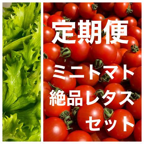 【定期便】ミニトマト約1kgと無農薬カットレタス1.5玉分(野菜の苦手なお子様にもオススメ!)