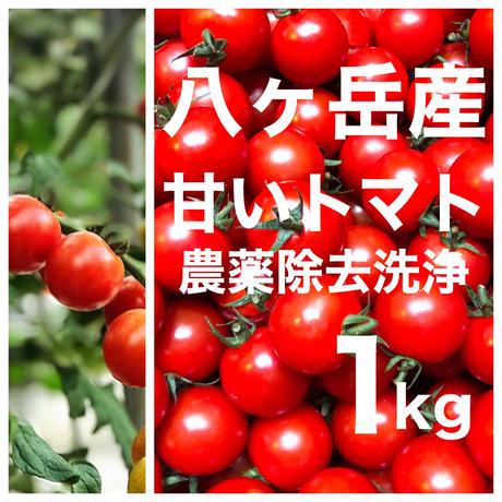 農薬、ウィルス、カビ、雑菌除去洗浄済 ミニトマト 箱込約1kg 甘くて味が濃い  八ヶ岳(長野県)産