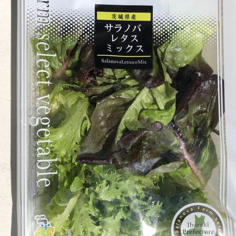 【定期便】無農薬葉物野菜5袋とミニトマト8パックの絶品サラダセット(無農薬水耕レタス等)