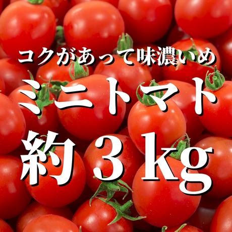 八ヶ岳産ミニトマト 約3kg