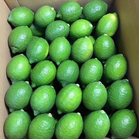 皮まで安心減農薬レモン 2kg