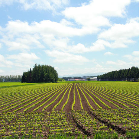 【2020年度産】無農薬大豆トヨマサリ 1〜3kg