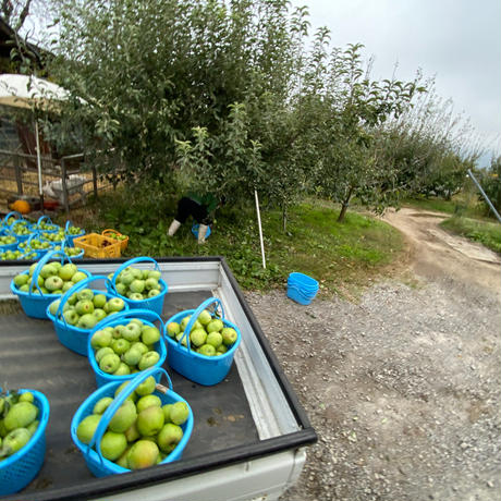 青りんご(グラニースミス)×バニラ×ラム