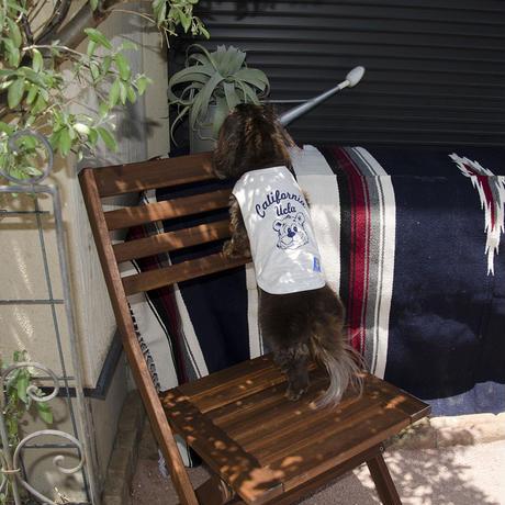 [UCLA-0391] UCLA カルフォルニアベアDOG WEAR(犬服)