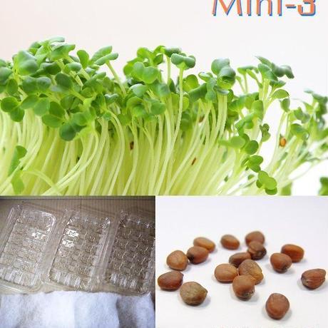 栽培クラブ 野菜 かいわれ大根 水耕栽培セット ミニ3 KS100-751qq