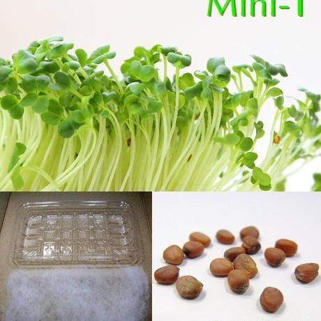 栽培クラブ 野菜 かいわれ大根 水耕栽培セット ミニ1 KS100-751
