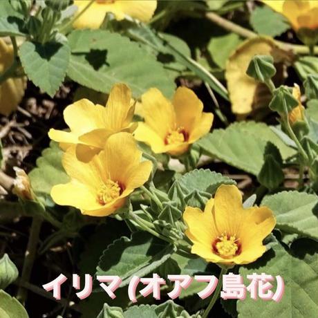 カラマブレスレット  イリマB /  ローズクォーツ
