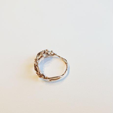 K10 Ring - Pianta