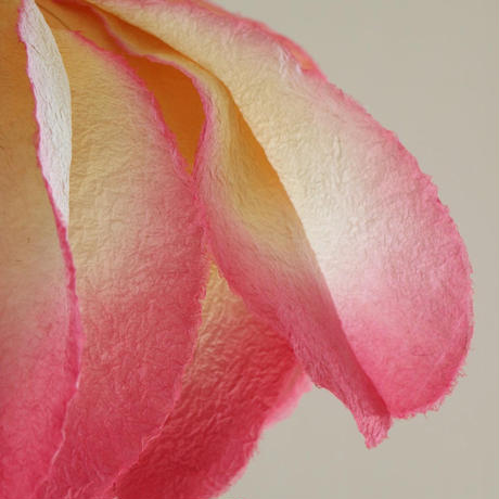 New薔薇2色タイプ/Lサイズ