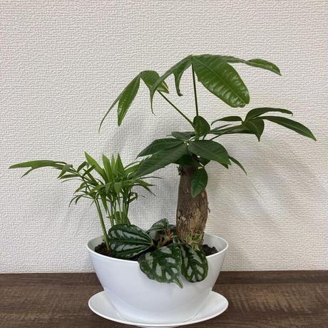 育てやすい観葉植物の寄せ植え K-75