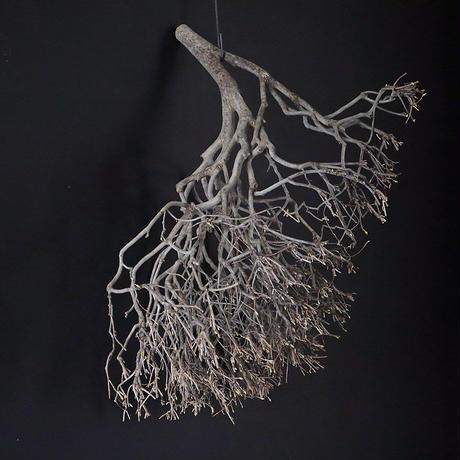 Branch Doudan A