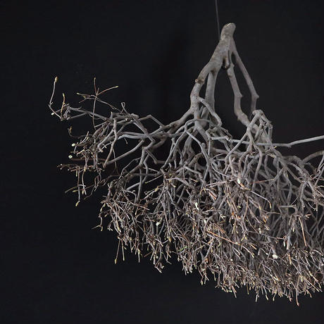 Branch Doudan D
