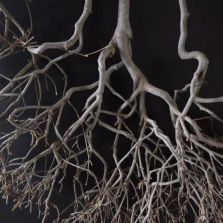 Branch Doudan E