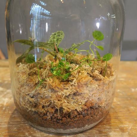 放置植物制作キット