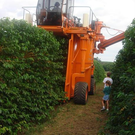 ブラジル マカウバ・デ・シーマ農園 シティロースト/中深煎り 200g