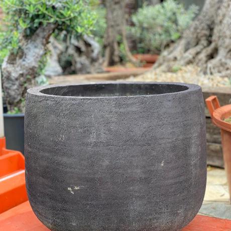 Import Old Olive 2019/09/27 N40 <Hojiblanca>
