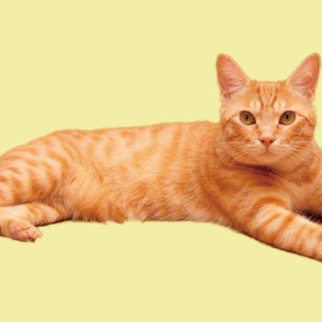 「ネコ」B5・見開き4週間・2020年版手帳