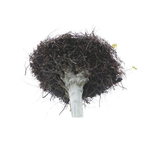 アバロス村野敦子写真集『Empty Nests』予約販売