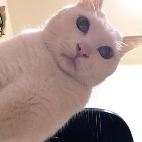 【スポンサー】リコのココロと時々、ネコ。(licolog.net)