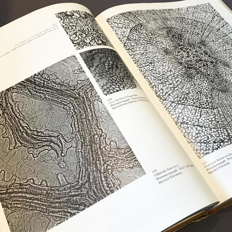 the new landscape in art and science (造形と科学の新しい風景) / Gyorgy Kepes