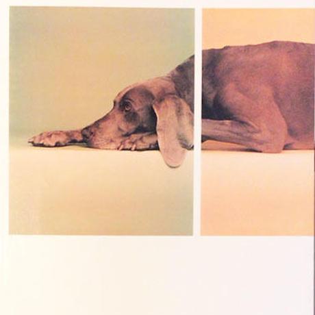 William Wegman  (ウィリアム・ウェグマン) 展 図録