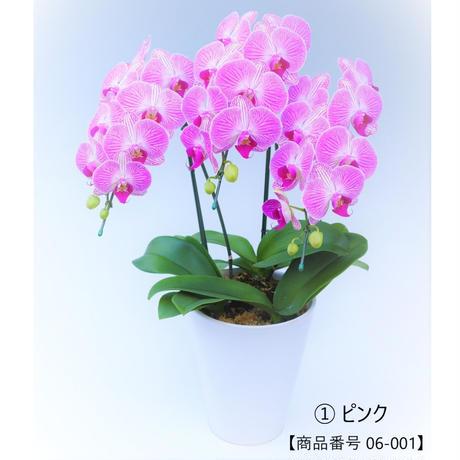 中輪ミディ胡蝶蘭 3本立て=ピンク=