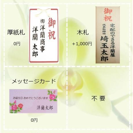 ★ハイグレード★ 大輪胡蝶蘭 3本立て=グリーンアース=