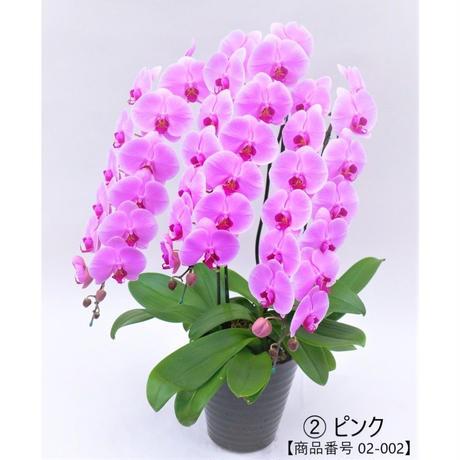 ★ハイグレード★ 大輪胡蝶蘭 3本立て=ピンク=