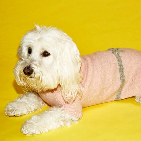 Ware Of The Dog Bow Sweater Pink